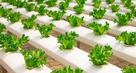 Beginner's Guide to Hydroponics
