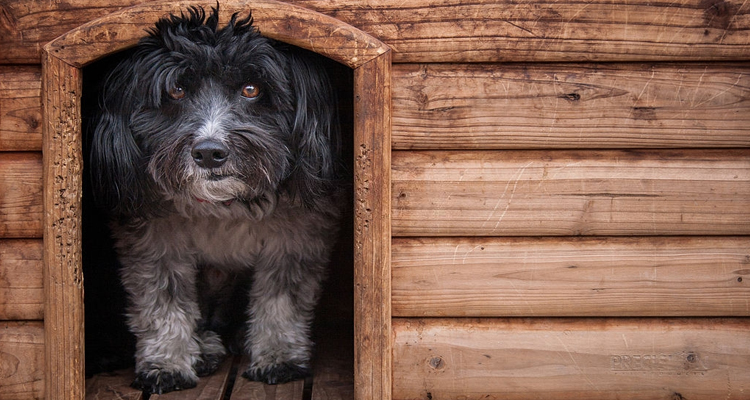 Cost of Building a Dog Kennel