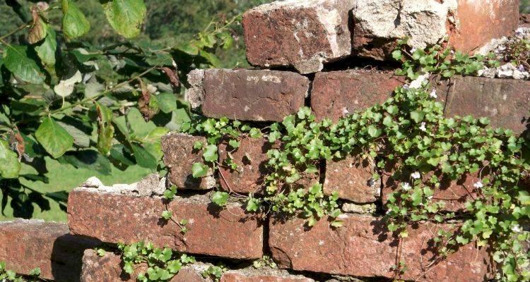 brickwall9