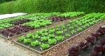 Growing your own Vegetable Patch