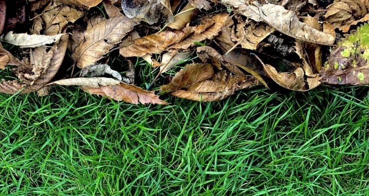 grassandleaves