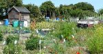 Bringing your Allotment to Life