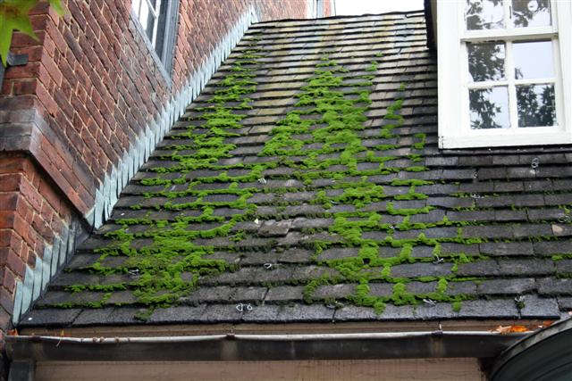 Is Moss Damaging Your Roof