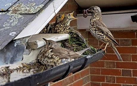 What To Do With Your Nesting Birds