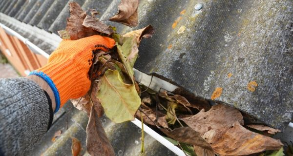 grabbing leaves out of the gutter