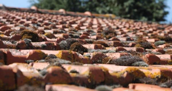 close up of moss growing on a tiled roof