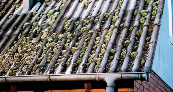 moss on roof 2