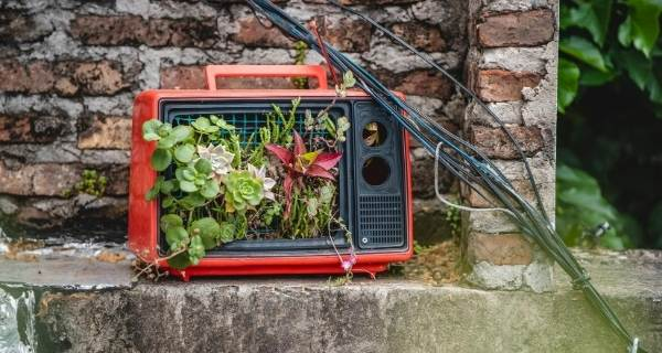 TV being used as a planter