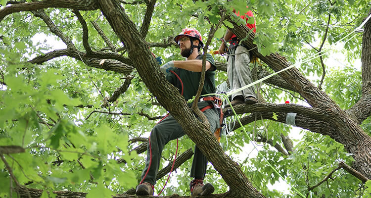Estimated Cost Of Tree Pruning And Trimming